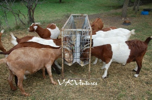 Feeders for Goats and Sheep