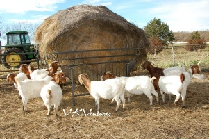 Round Bale Feeders for Goats and Sheep
